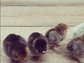 Nicole Richie recently invited a few new chicks into the family, sharing this great shot with her Instagram followers.