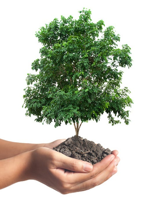 636104164396031313-planting-tree.jpg
