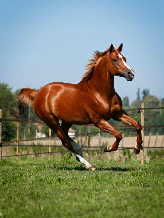 -horse.jpg_20150327.jpg