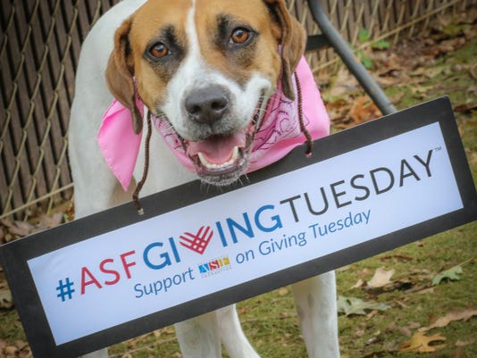 636453314827951707-giving-tuesday-Sweet-Pea-1-copy.jpg