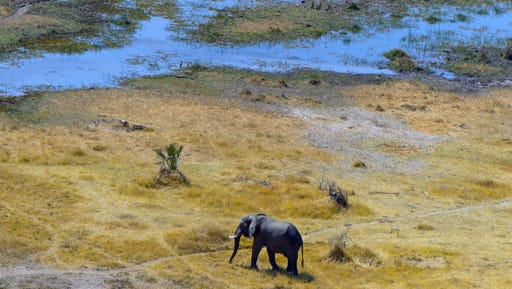 This Sept. 2, 2016 aerial photo taken from a helicopter shows an elephant making its way across mixed Okavango Delta terrain during Botswana's dry season. The Delta is a diverse region made up of islands, rivers, tree lines and waterholes with some areas permanently inundated by water.