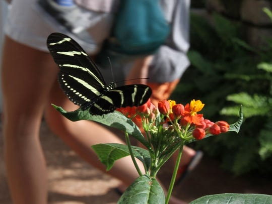 A butterfly rests briefly at River Bend Nature Center,