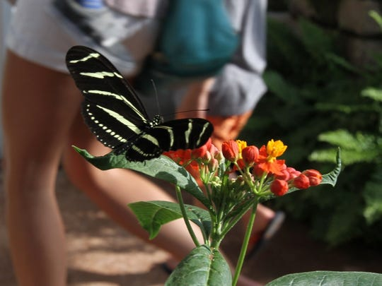 A butterfly rests briefly at River Bend Nature Center, which will be open late May 5, from 5:30-8:30 p.m., for its annual BugFest.