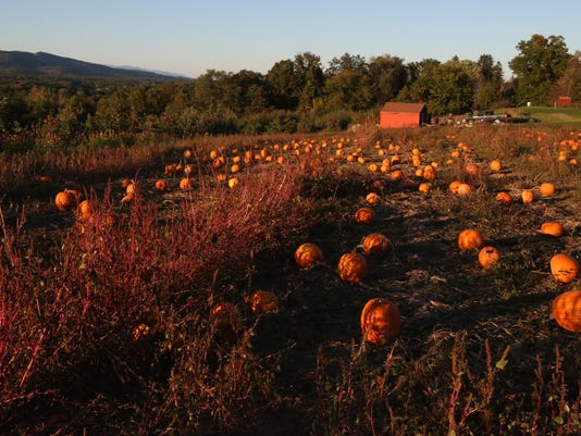 Pumpkins at Dressel Farms