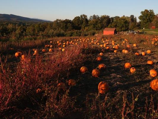 Pumpkins at Dressel Farms