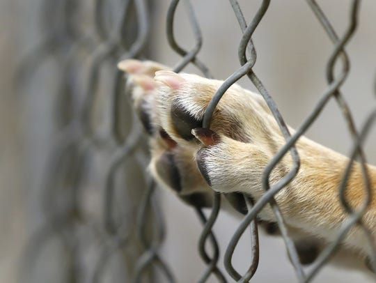 A bill that would keep people convicted of animal abuse from owning pets cleared the Indiana General Assembly this week and is waiting for Gov. Eric Holcomb's signature. The bill originated from concerns from Tippecanoe County Prosecutor Pat Harrington and Greater Lafayette animal advocates.