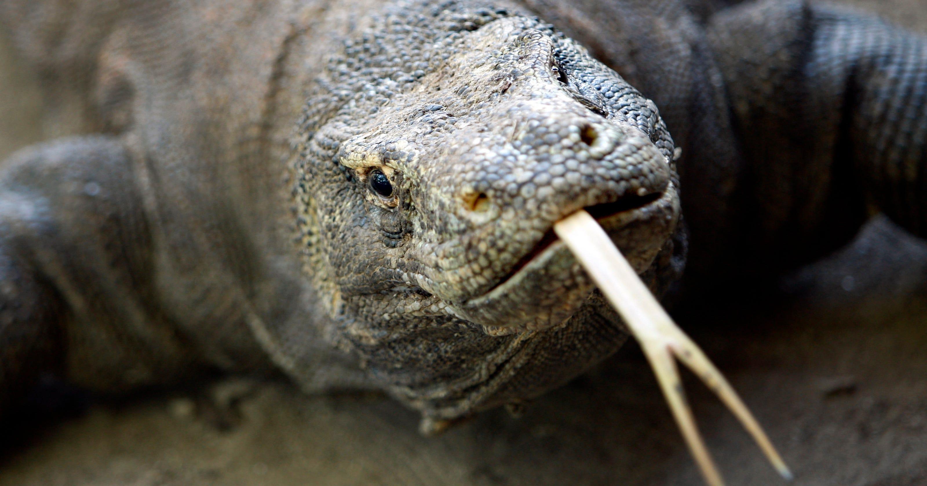Police: Woman kills boyfriend after spat with reptilian cult