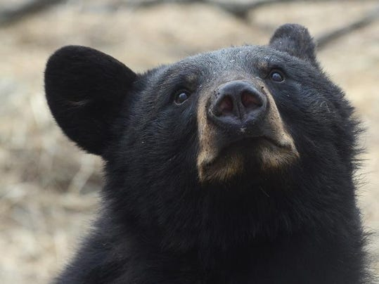 Bears 1.jpg