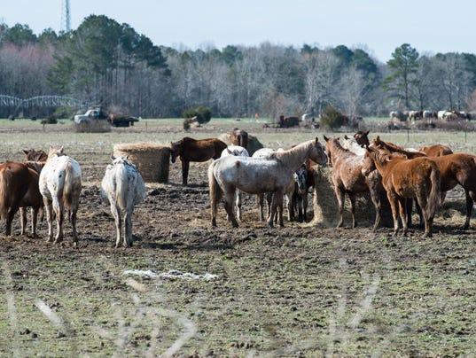 20180319rm-Horse-Farm-5.jpg