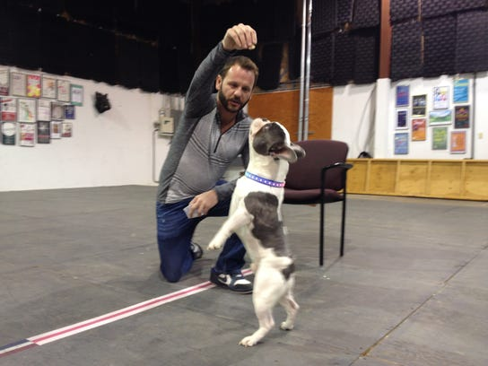 Doggie-auditions-5