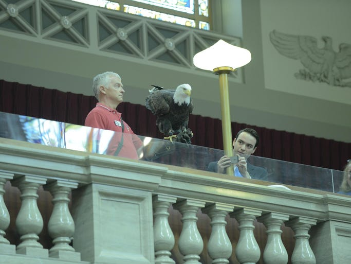 Eagle flies in House Chamber