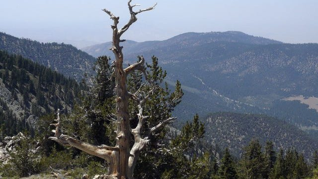 STAR FILE PHOTO The summit of Mount Pinos offers expansive views of the Los Padres National Forest from 8,831 feet above sea level. The mountain is also considered the best place around to stargaze.