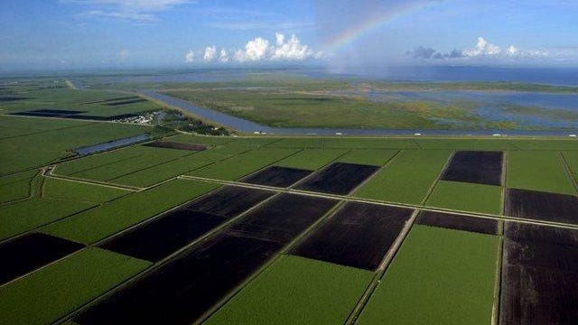Fallow land and green sugar cane are divided into rectangular fields in the Everglades Agricultural Area, which borders a rim canal and natural marsh land in Lake Okeechobee in this 2005 photo. Belle Glade and a rainbow can be seen in the distance.