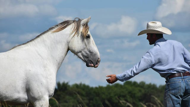 Veteran horse trainer Byron Hogan will use what he has learned about wild horses to lead a workshop on emotional intelligence at Bartlesville Community Center on Aug. 29. Courtesy