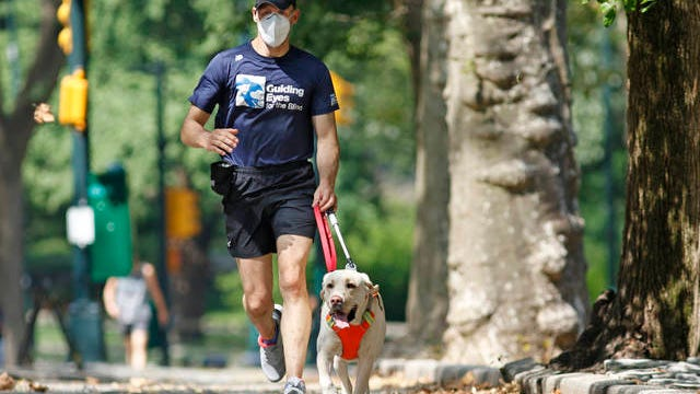 Thomas Panek runs with his running guide, Blaze, a Labrador retriever, Thursday, July 23, 2020, in Central Park in New York. Panek, a blind runner with a wall full of ribbons from marathons he ran with a human guide, developed a canine running guide training program five years ago after he became president and CEO of Guiding Eyes for the Blind in suburban New York. Kathy Willens/AP, file