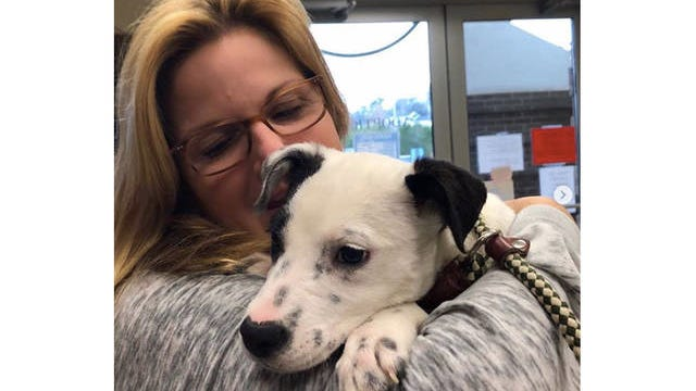 Country star Trisha Yearwood adopted her dog Millie from the Maury County Animal Shelter.