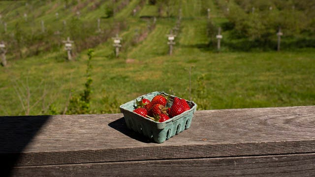 Freshly picked strawberries sit on a balcony overlooking the Wagner Berry Farm in Spring Hill on April 10. The social distancing precautions will be in place when the farm opens to the public for strawberry picking on April 22.
