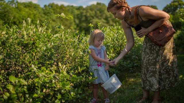 Halen Craig, 2, and Taylor Beasley pick blueberries at Highland Realm Farm in Hampshire on Saturday.