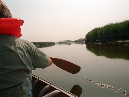 An individual paddles up Berry's Creek in the summer