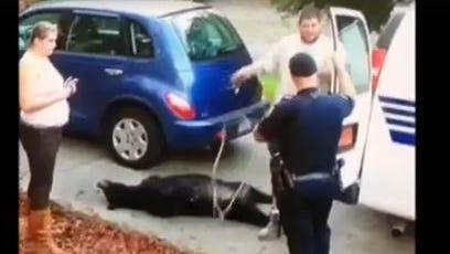 A bear was killed in a West Asheville neighborhood in 2013.