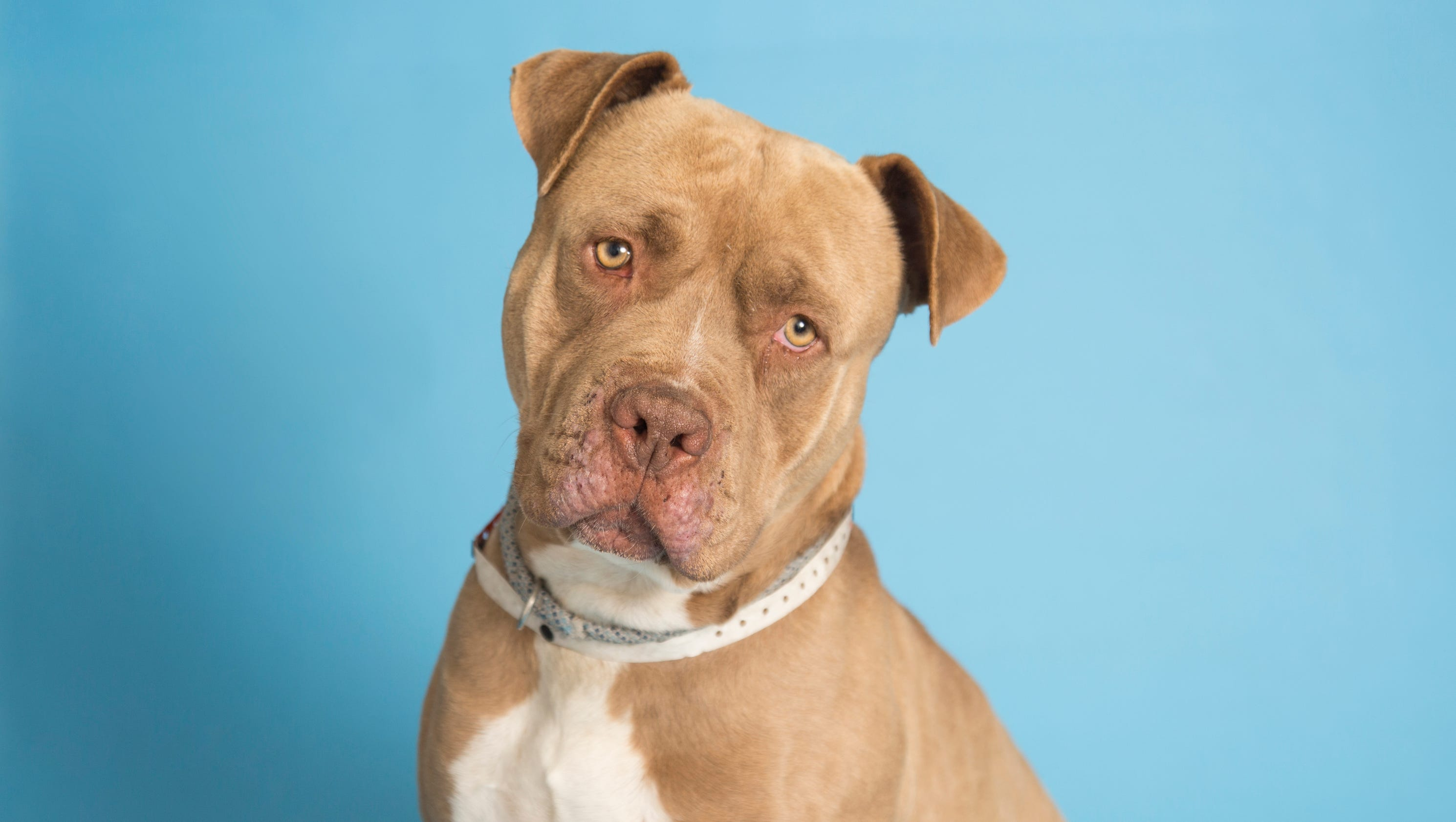 Phoenix Az Dogs For Adoption