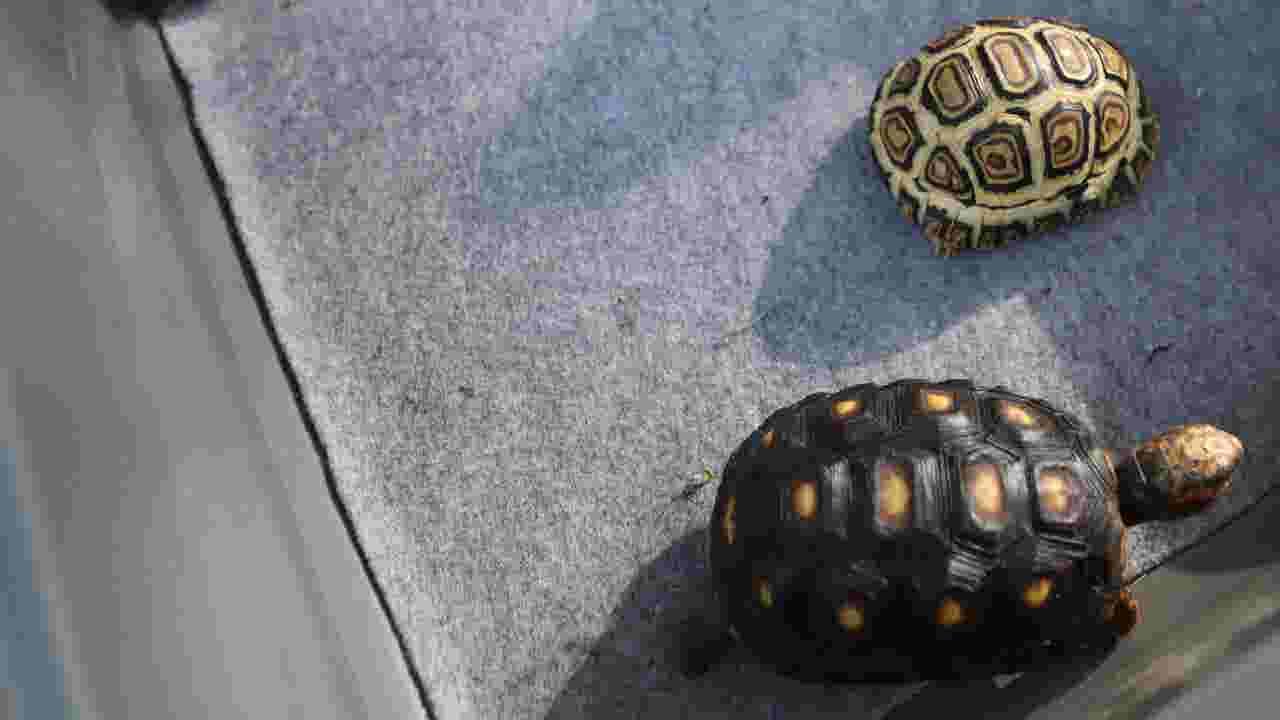 Turtle, tortoise rescue sanctuary opens new adoption center