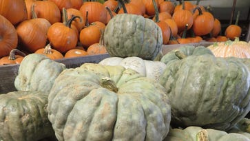Cooking School: Carve out time to learn about new and classic pumpkin types