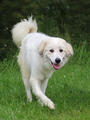 Skye is available for adoption at the Licking County Dog Shelter.