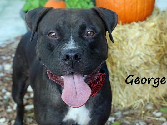 George-A636500.jpg