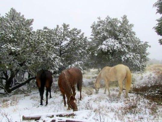 three horses in snow