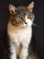 Meet Juliana and all the cats available for adoption