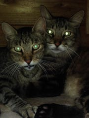 Gucci & Fluffy, once feral cats, prefer spending their time together rather than with people.