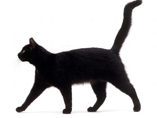 Why Black Cats Were Considered Unlucky