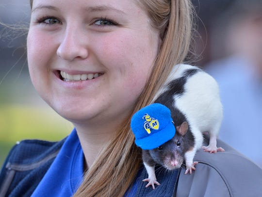 Dogs Cats Even Rats Blessed At Annual Madonna Event