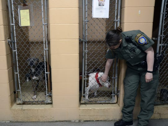 Animals are held in the Calhoun County Animal Shelter's