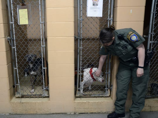 Animals are held in the Calhoun County Animal Shelter's drop-off area. Battle Creek animal control officer Eden Ross stops by during her shift to give one of the dogs some love.
