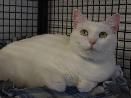 Molly is available for adoption at 10807 N. 96th Ave. in Peoria. For more information, call 623-773-2246 after 10 a.m.