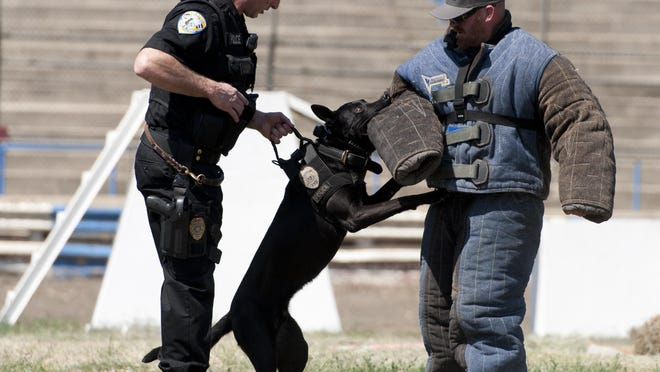 """Visalia Police Officer Mike Carsten, left, and his Belgian Malinois """"Bronson"""" work with Farmersville Police Officer Darrell Locke in a protective suit before the Sierra K-9 Trials at Plaza Park on Thursday, May 12, 2016."""