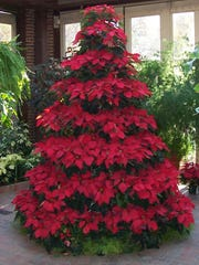 A highlight of the Biedenharn Museum and Gardens annual Christmas decor is the poinsettia Christmas tree.