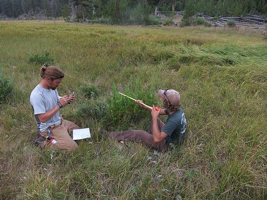 Researchers from Colorado State University's Warner College of Natural Resources collected and analyzed a wealth of data from Yellowstone National Park to get a clearer picture of the effects of reintroducing wolves to the ecosystem.