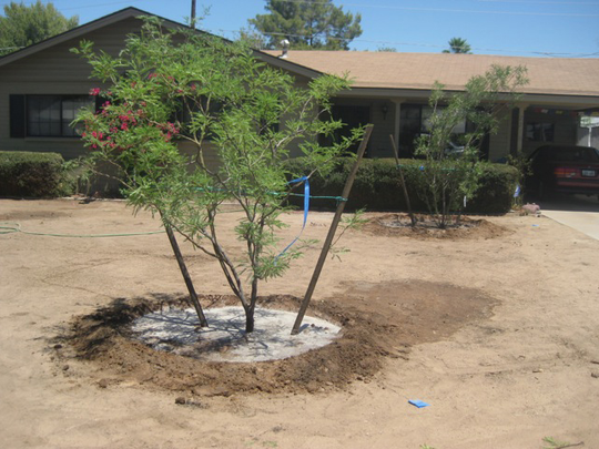 AFTER: Phoenix resident Susan Clark converted her front yard from a lawn to desert landscaping and saw her monthly water bill plummet.