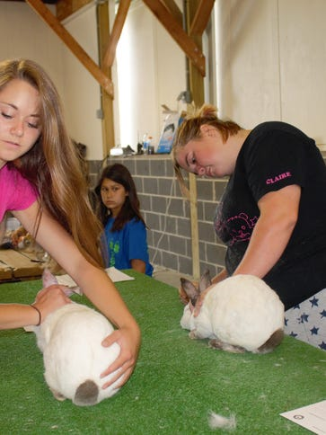 Katie Ries, 19, checks her rabbits in for auction.