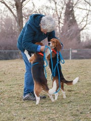 Beagles Scamp and Meeko get some love at Canine Rehabilitation