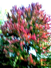 """A photo, titled """"Dorothy Tree,"""" of a memorial tree for his wife, by Walter Nolting. Nolting has aphasia, a condition that affects communication."""