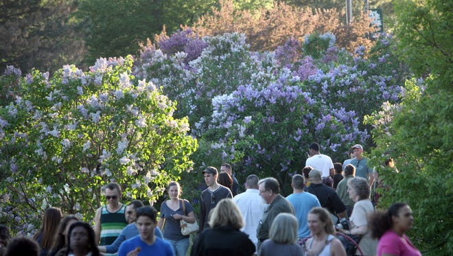 The Rochester Lilac Festival kicks off Friday, May 12, and continues through Sunday, May 21, in Highland Park.