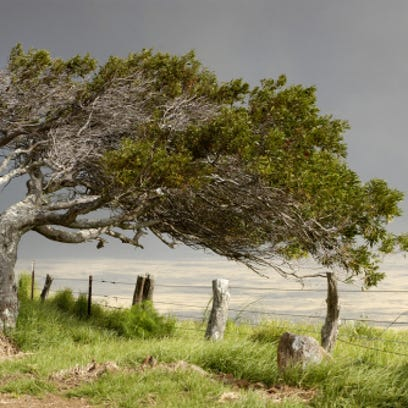 Tree swaying in a storm
