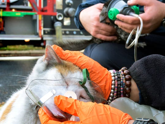 Dover EMS techs administer oxygen to a chinchilla and cat during a morning fire at a Dover Borough home Tuesday, Oct. 27, 2015.
