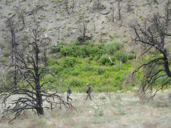 Plant and animal life in Burbank Canyon near Smith Valley, Nev., is recovering from a 2011 wildfire that burned more than 1,100 acres.