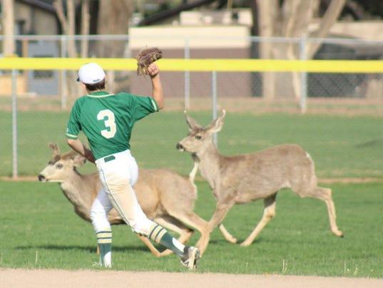 Baseball deer.jpg