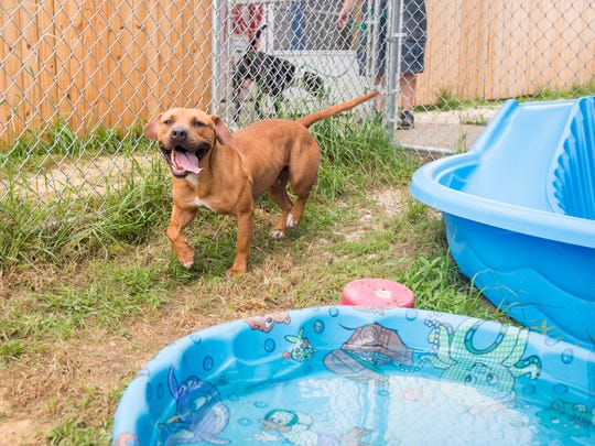 Rico plays in the yard at the Escambia County Animal Shelter in Pensacola on Friday, May 25, 2018.